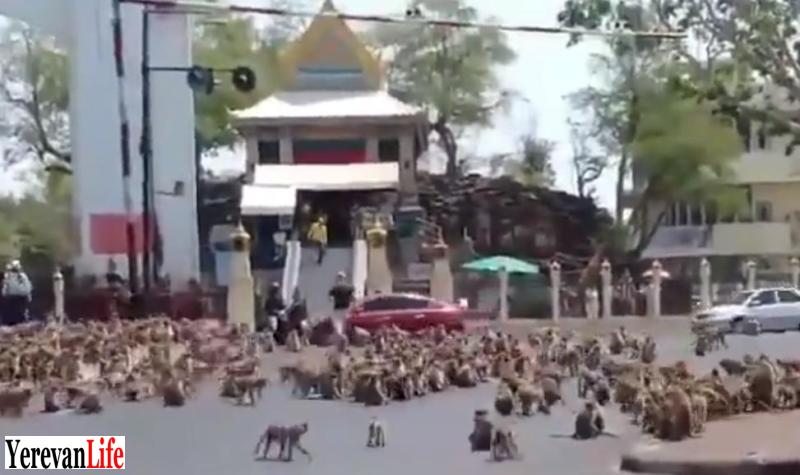 A troup of hungry monkey's take over the street in Thailand